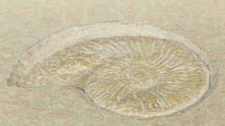 Kalkstein Solnhofer