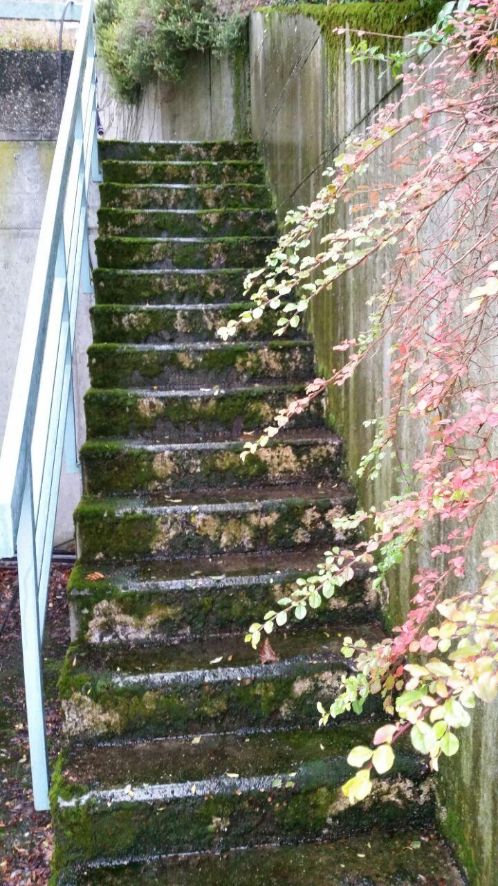 saro ohg vermooste betontreppe vor der reinigung