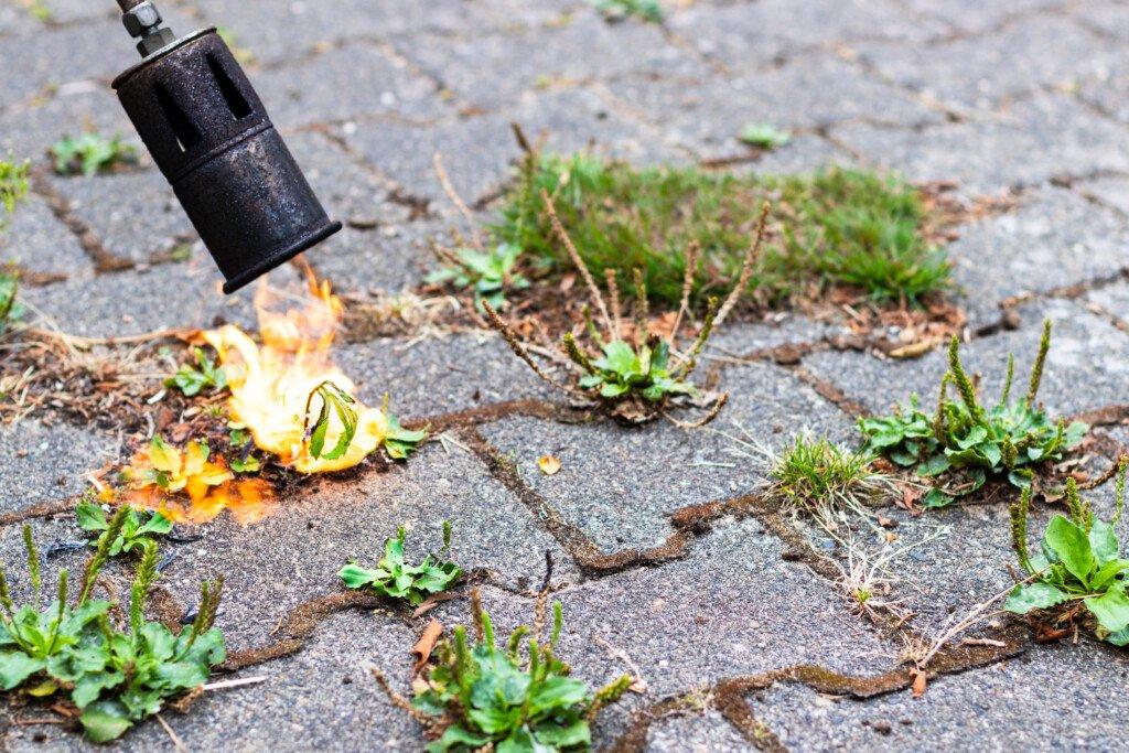 Unkraut mit Propangasbrenner abflammen und verbrennen